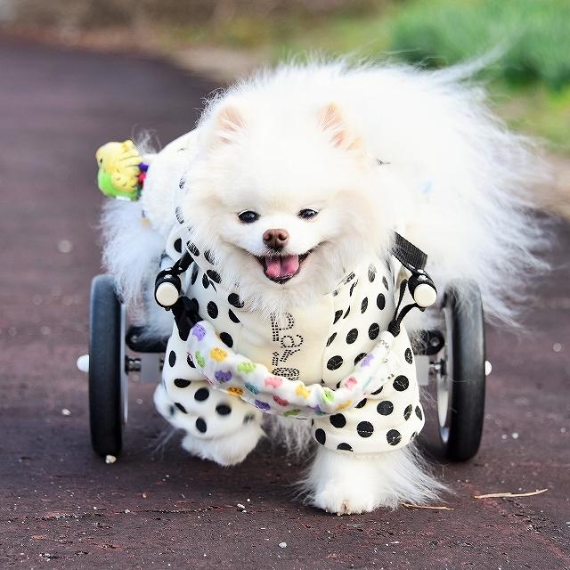車椅子日和_d0360206_23544763.jpg