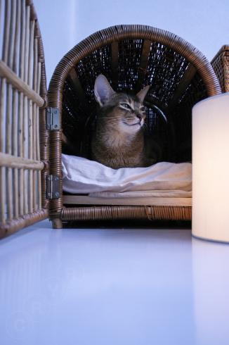 [猫的]家持ち_e0090124_22553109.jpg