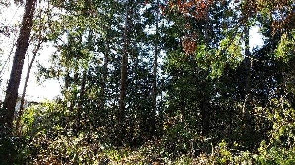 30・薪林業のフィールド/大野台地の森_a0051539_21525776.jpg