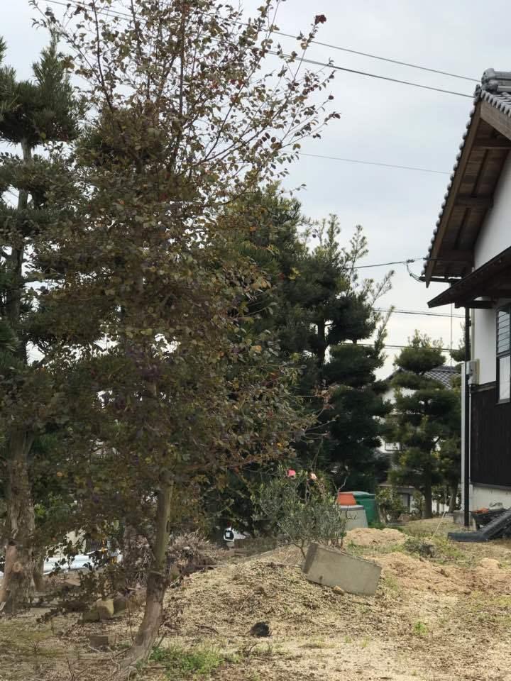 四国へ・・・・・愛媛県から香川へそして高知へ・・・そして京都・・_b0137969_06355668.jpg