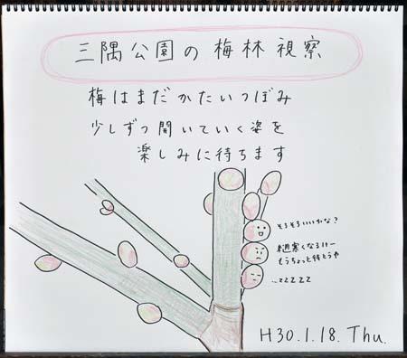 梅待ち_b0364195_12275496.jpg