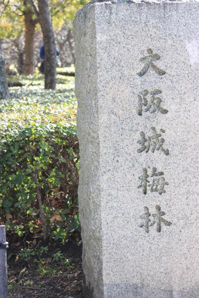 今日は暖かいので大阪城梅林まで_f0118400_12481021.jpg