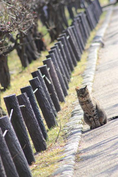 今日は暖かいので大阪城梅林まで_f0118400_12522406.jpg