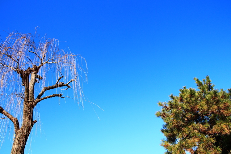 祇園四条 青空の鴨川 _f0209122_18234868.jpg