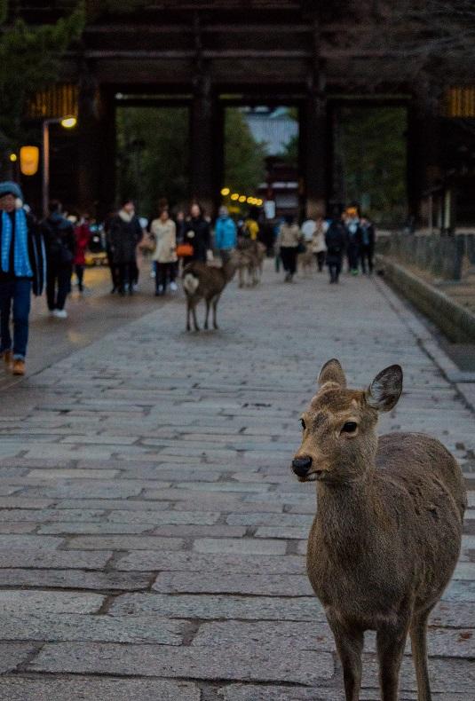 奈良の鹿たち_e0363038_13265950.jpg