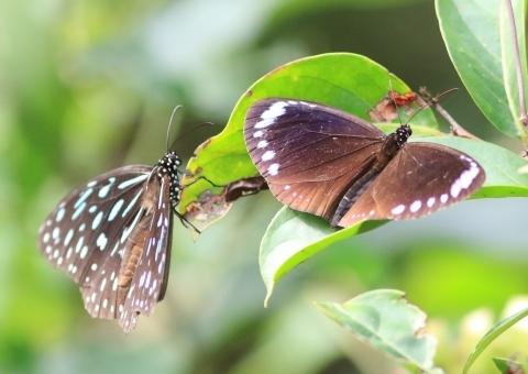 集まってきた蝶達_d0285540_22290586.jpg