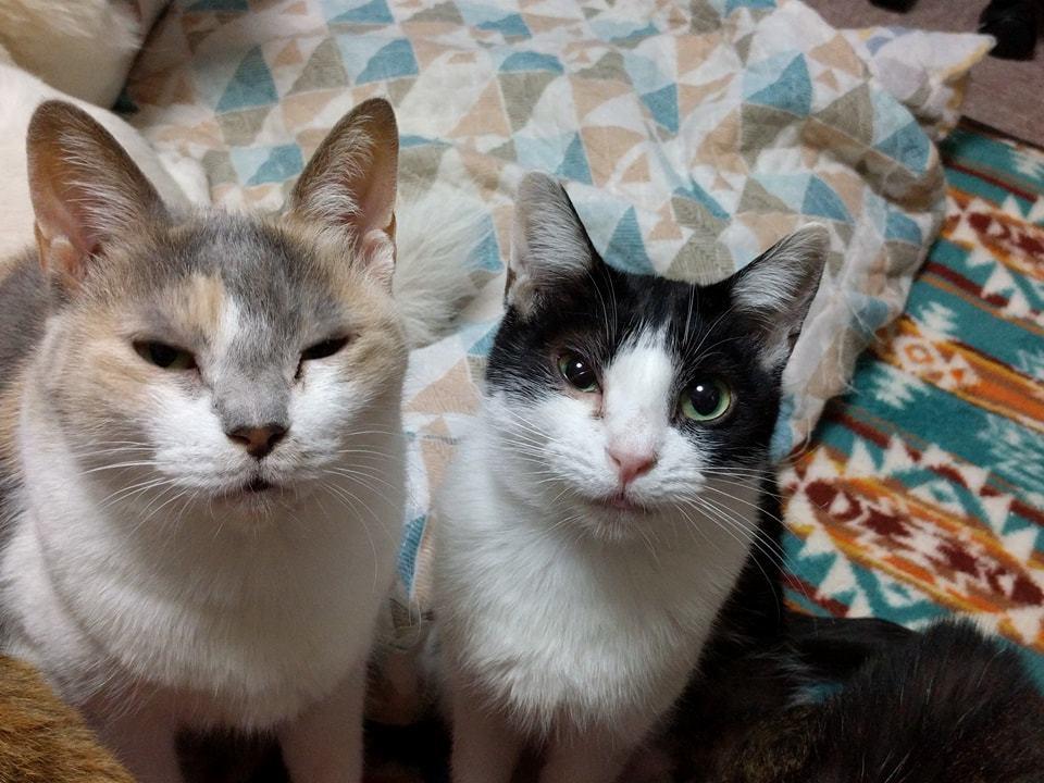 猫の譲渡会のお知らせ☆ひかりとのぞみも家族募集中です!!_c0372561_01395201.jpg