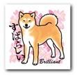 柴犬のお勉強 日本犬標準「一、本質と其の表現」_b0057675_14272176.jpg