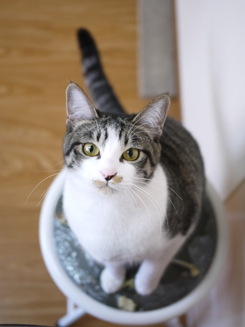 猫のお留守番 みりんちゃん編。_a0143140_21085161.jpg