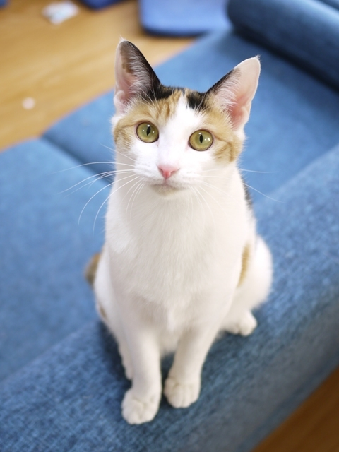 猫のお留守番 りんごちゃん編。_a0143140_21112953.jpg