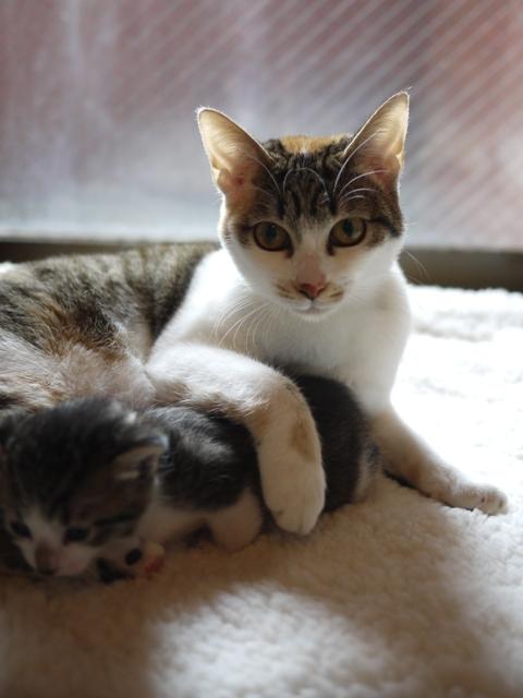 猫のお預かり ぽんずちゃんおろしくん編。_a0143140_21172754.jpg