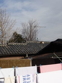 屋根の上に・・・。_c0223192_23410190.jpg