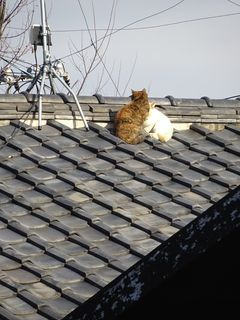 屋根の上に・・・。_c0223192_23410647.jpg