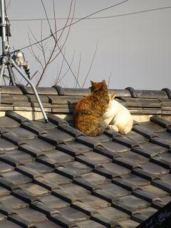 屋根の上に・・・。_c0223192_23410928.jpg
