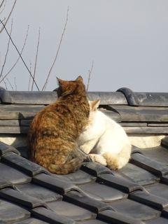 屋根の上に・・・。_c0223192_23411236.jpg