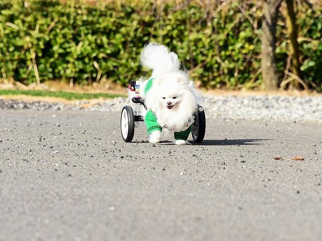 車椅子効果_d0360206_23461708.jpg