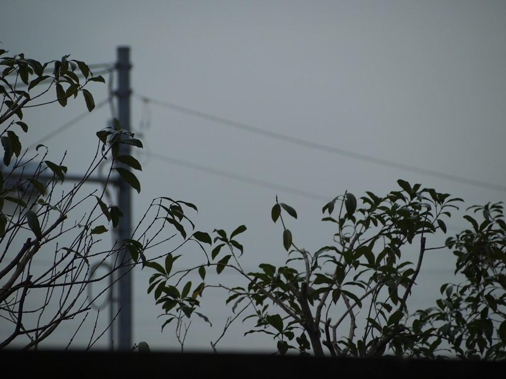 曇りのち晴れ・・・・・!_a0214329_1105972.jpg