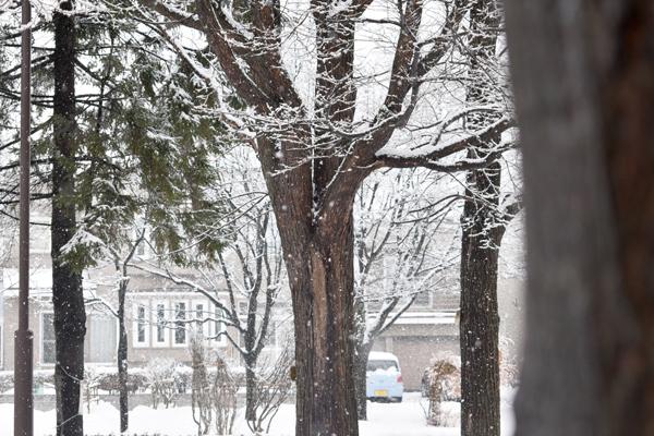 冬景色_a0230872_23575372.jpg