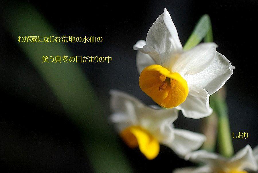 c0187781_14114969.jpg