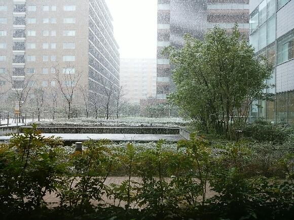 予報通りの雪_f0255704_14164776.jpg