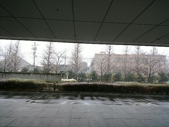 予報通りの雪_f0255704_14164860.jpg