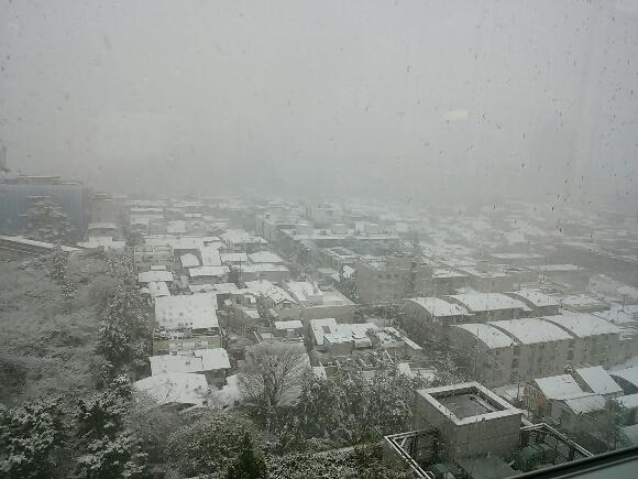 予報通りの雪_f0255704_22024823.jpg