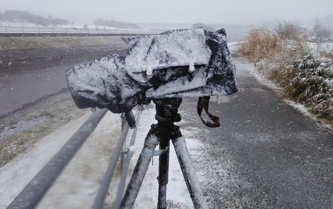 1月21日 (月) 雪_e0146518_16261972.jpg