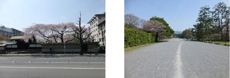 京都観桜編(13):京都御所(15.3)_c0051620_1753331.jpg
