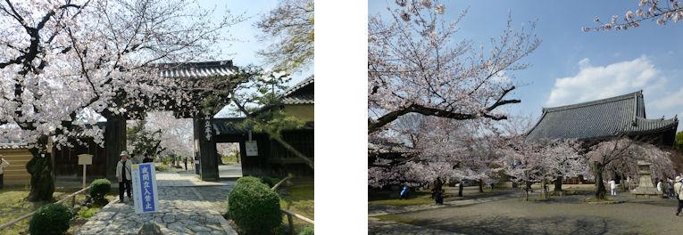 京都観桜編(13):京都御所(15.3)_c0051620_17551152.jpg