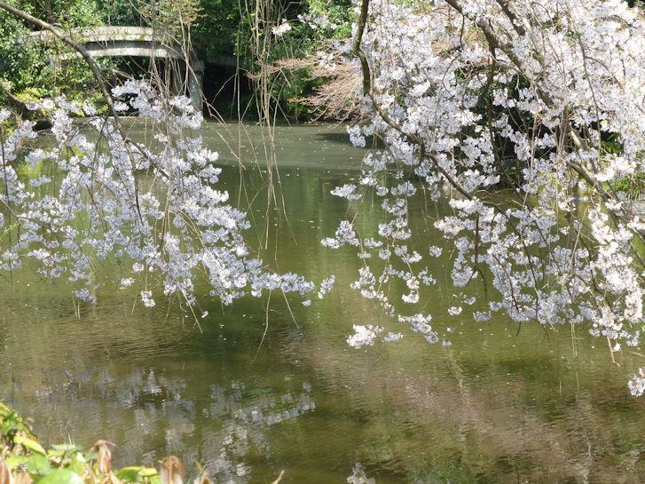 京都観桜編(13):京都御所(15.3)_c0051620_1823711.jpg
