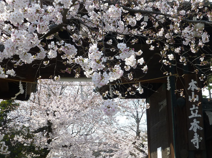 京都観桜編(13):京都御所(15.3)_c0051620_1833441.jpg