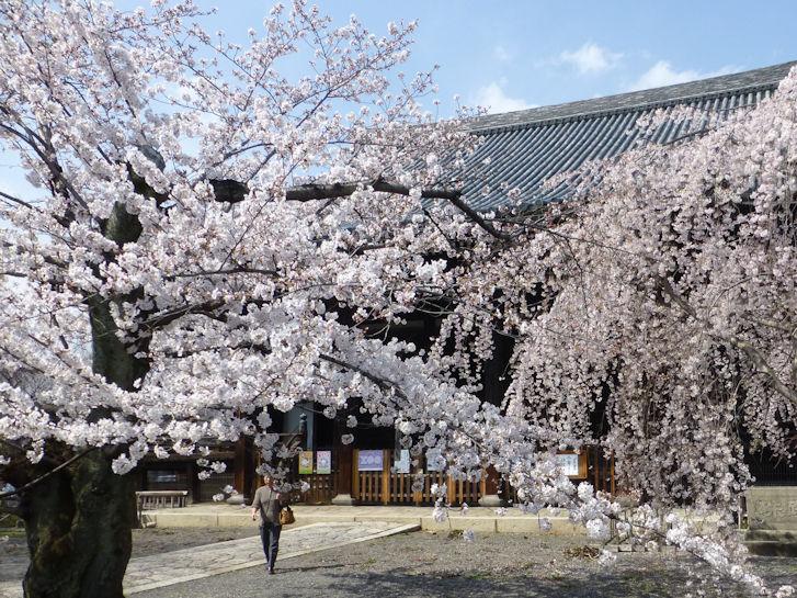 京都観桜編(13):京都御所(15.3)_c0051620_183487.jpg