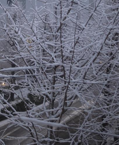 雪の日に_a0169924_22000932.jpg