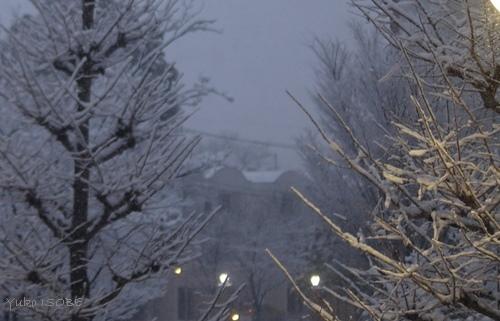 雪の日に_a0169924_22002992.jpg