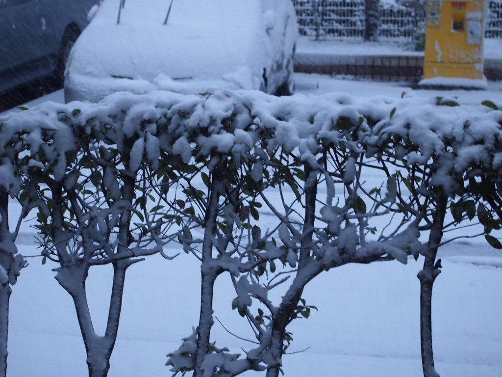 都内は大雪で今日、明日も大変です・・・・。_a0214329_18552923.jpg