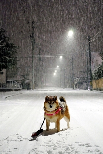 OH!雪_b0314043_22525595.jpg
