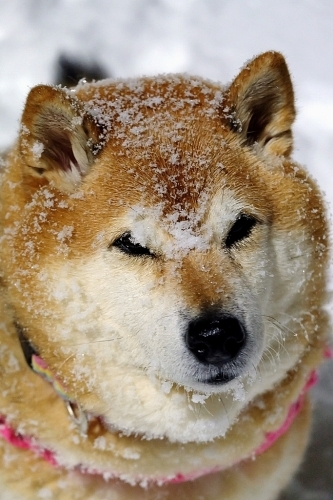 OH!雪_b0314043_22530866.jpg