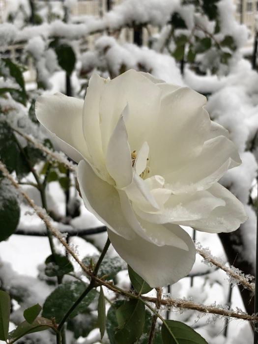雪です〜_c0012247_18060568.jpg