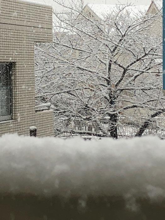 雪です〜_c0012247_18061198.jpg