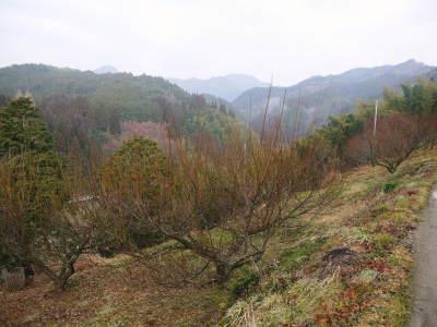 山あいの南高梅 冬の剪定(2018)その1(収穫後からつぼみが膨らむまで)_a0254656_16534815.jpg