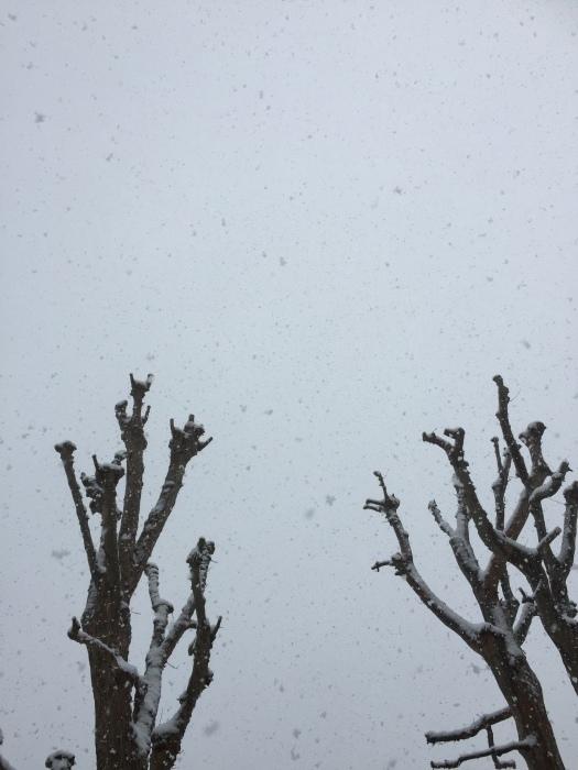 雪  (再会は天からのBIG サプライズ 大雪)の巻_d0105967_16400697.jpg