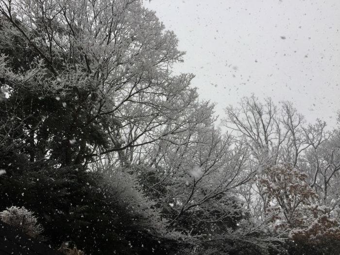 雪  (再会は天からのBIG サプライズ 大雪)の巻_d0105967_16434171.jpg