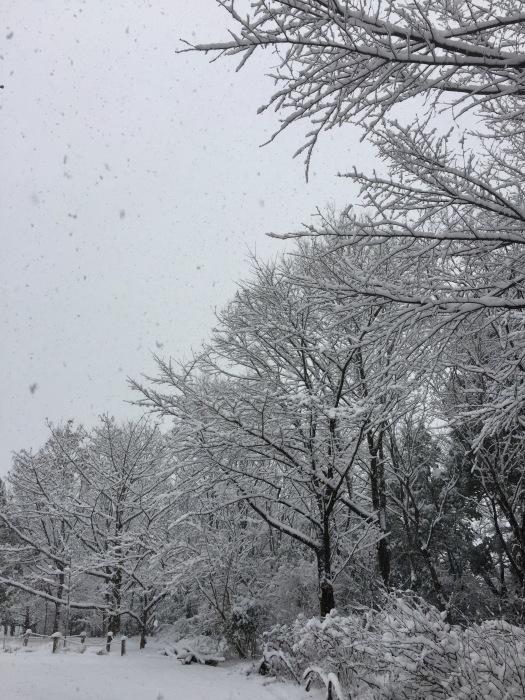 雪  (再会は天からのBIG サプライズ 大雪)の巻_d0105967_16445561.jpg