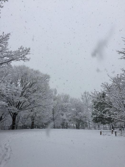 雪  (再会は天からのBIG サプライズ 大雪)の巻_d0105967_16455686.jpg