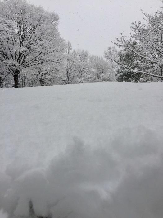 雪  (再会は天からのBIG サプライズ 大雪)の巻_d0105967_16471401.jpg