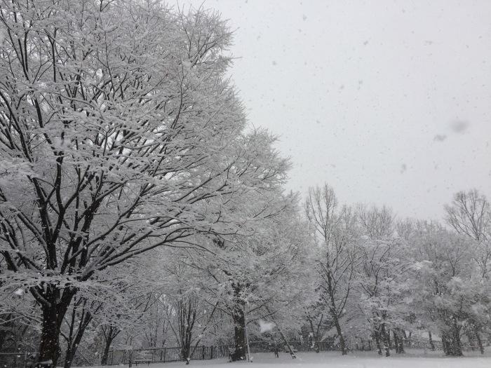 雪  (再会は天からのBIG サプライズ 大雪)の巻_d0105967_16485909.jpg