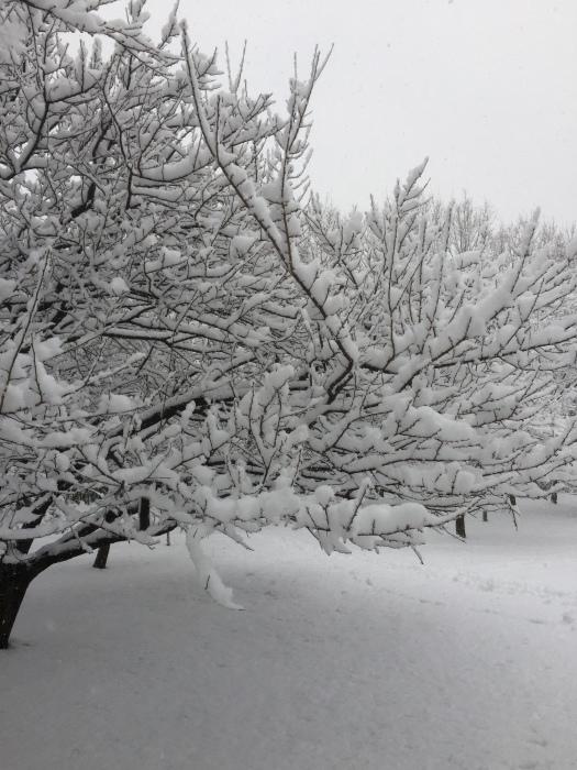 雪  (再会は天からのBIG サプライズ 大雪)の巻_d0105967_16501396.jpg