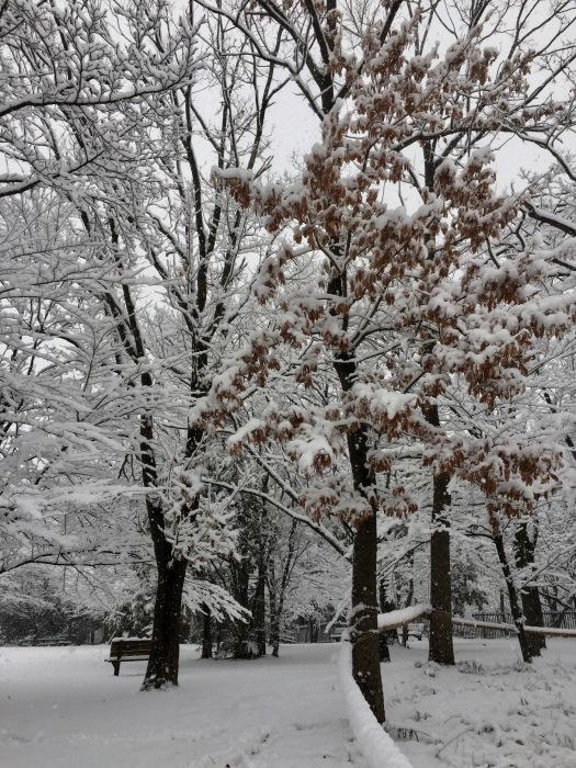 雪  (再会は天からのBIG サプライズ 大雪)の巻_d0105967_16523808.jpg