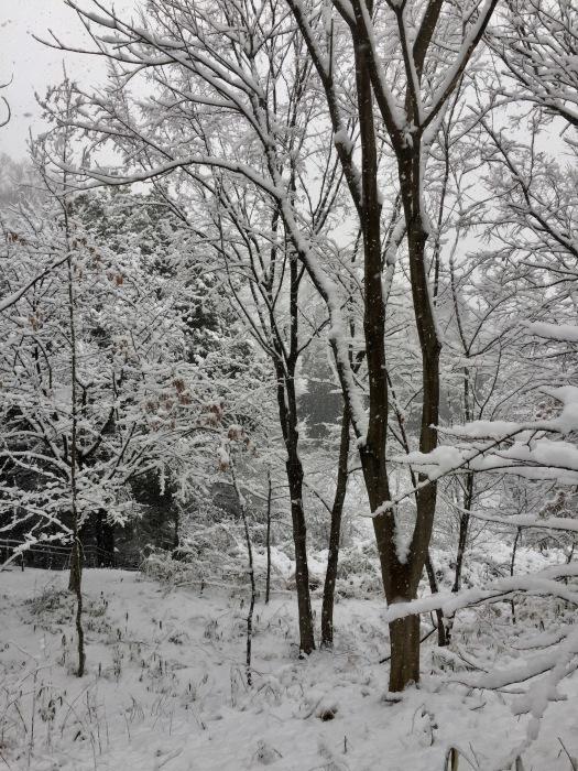 雪  (再会は天からのBIG サプライズ 大雪)の巻_d0105967_16534508.jpg