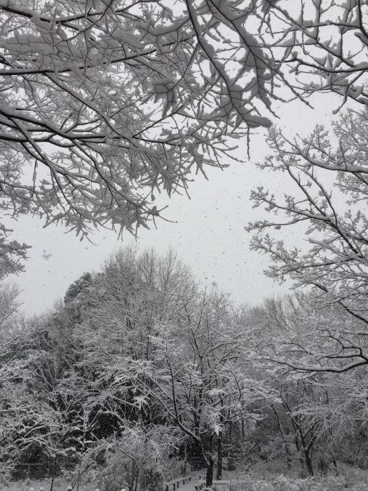 雪  (再会は天からのBIG サプライズ 大雪)の巻_d0105967_16545763.jpg